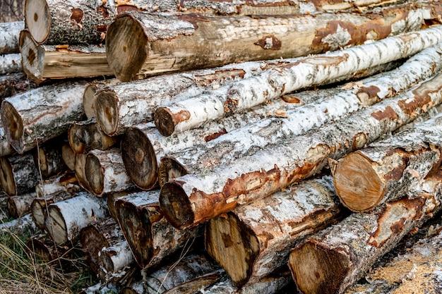 Waldkiefern und fichten. holzstämme stapeln sich, die holzindustrie.