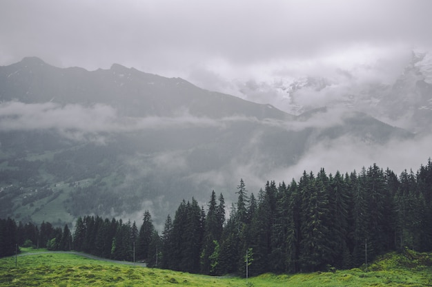 Waldlandschaftshintergrund in der schweiz