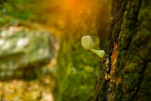 Waldpilze im gras pilze sammeln pilzfoto waldfoto