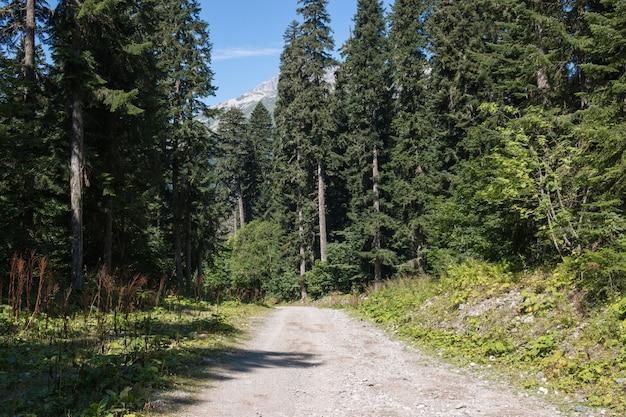 Waldszenen im nationalpark dombai, kaukasus, russland, europa anzeigen. sommerlandschaft, sonnenscheinwetter, dramatischer blauer himmel und sonniger tag