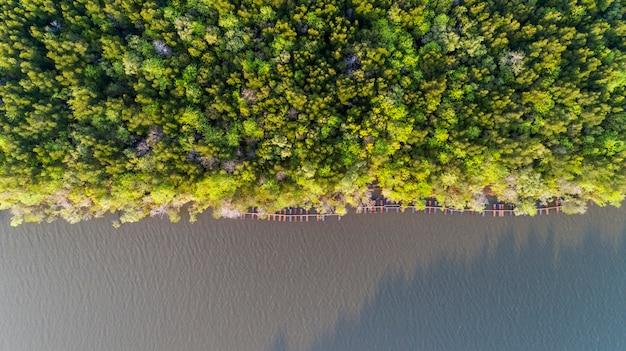 Waldwachstumsbäume, grüner mangrovenwaldhintergrund der natur