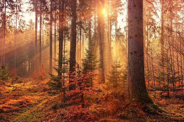 Waldwärme durch sonnenstrahl