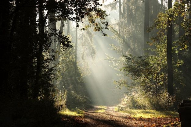 Waldweg an einem nebligen morgen im frühherbst