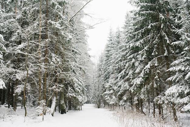 Waldweg im schneebedeckten wald des winters