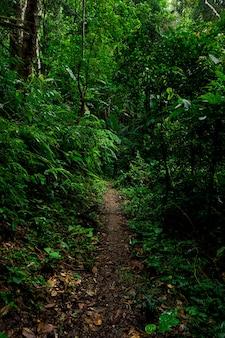 Waldweg landschaft hintergrund