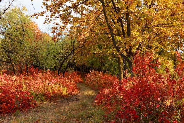 Waldweg mit roten und gelben bäumen