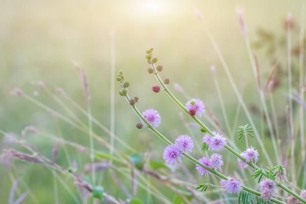 Waldwiese mit wilden gräsern, makrobild mit kleiner schärfentiefe, unscharfer hintergrund