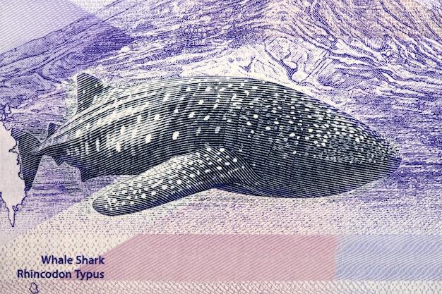 Walhai ein porträt aus dem philippinischen peso