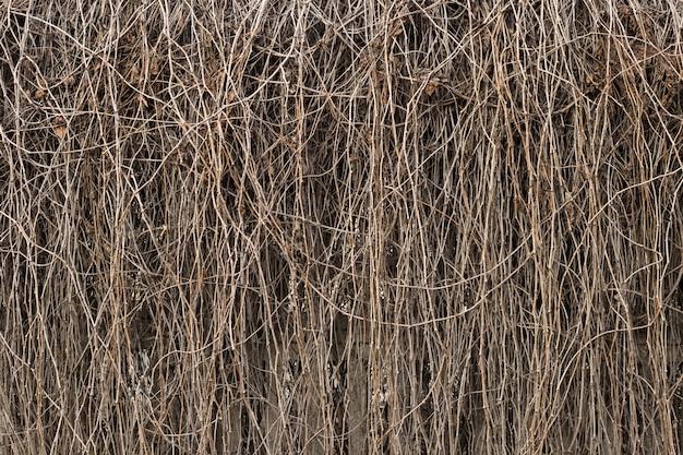 Wand der trockenen rebe. weinreben textur. zusammenfassung der trockenen braunen zweige auf dem zaun