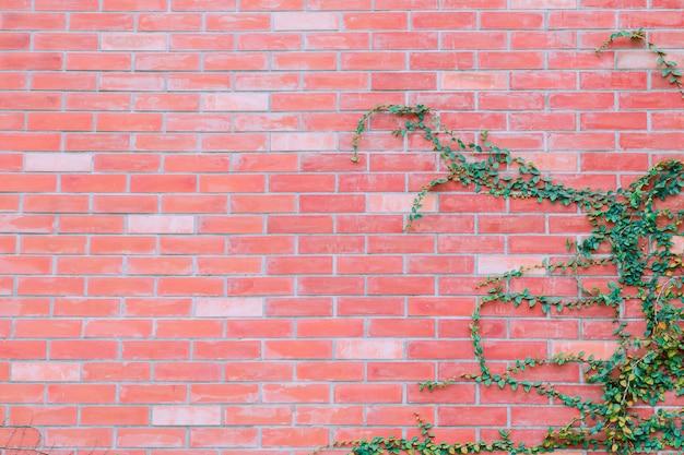 Wand des roten backsteins mit grünem efeuhintergrund