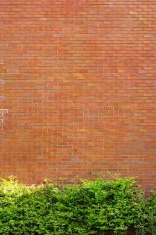 Wand-fragmenthintergrund des roten backsteins mit grünpflanze.