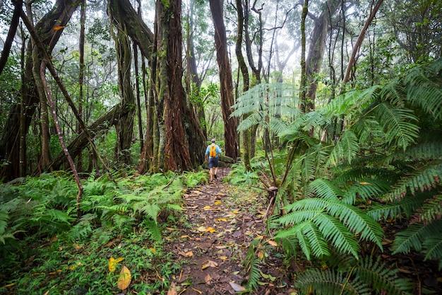 Wanderer auf der spur im grünen dschungel, hawaii, usa