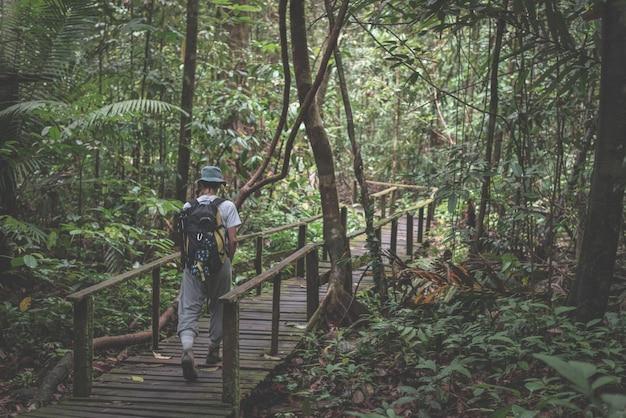 Wanderer, der den majestätischen dschungel von kubah national park, west-sarawak, borneo, malaysia erforscht.