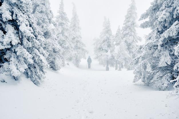 Wanderer, der zwischen schneebedeckten bäumen geht