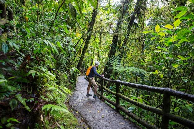 Wandern im grünen tropischen dschungel, costa rica, mittelamerika