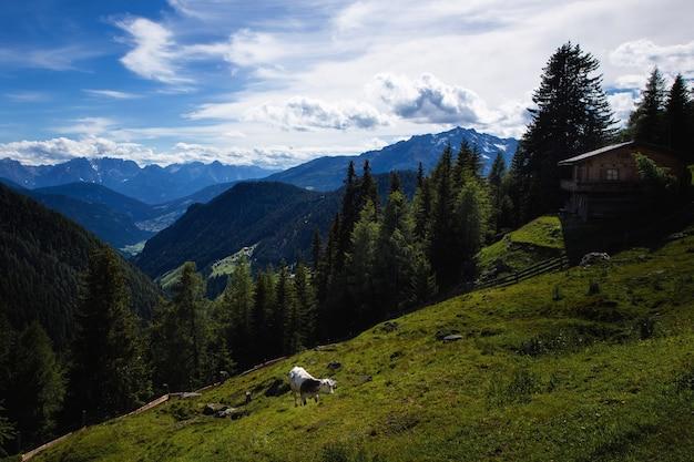 Wandern in österreich mit herrlicher aussicht.