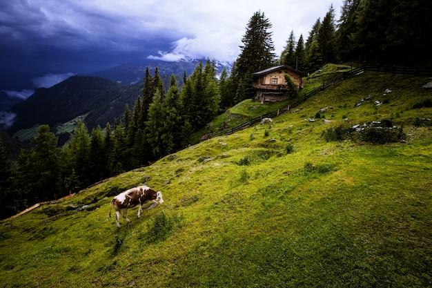 Wandern in österreich mit herrlicher aussicht. Premium Fotos