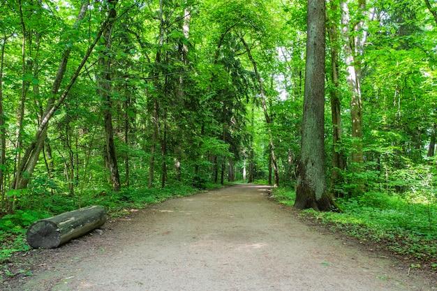 Wanderweg durch einen wald mit bäumen auf beiden seiten.