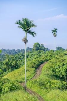 Wanderweg für touristen und palmen auf dem kamm von campuhan außerhalb von ubud, bali, indonesien. steinfußweg zwischen hellen bunten wiesen mit grünem gras im hangtal am sonnigen tag