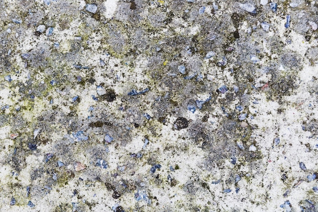 Wandfläche mit moos