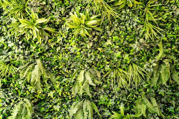 Wandhintergrund von grünen blättern von pflanzeninnenarchitektur