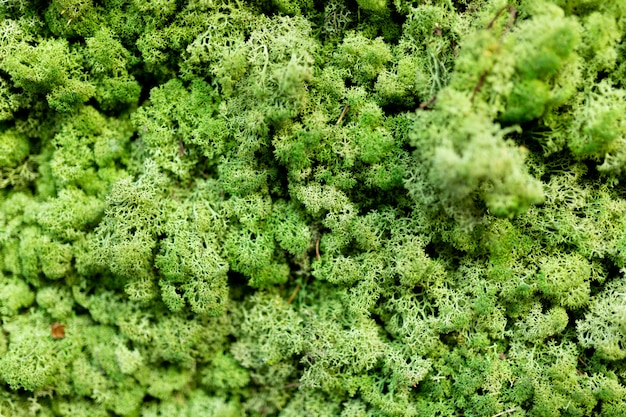 Wandverkleidung aus grüner flechte