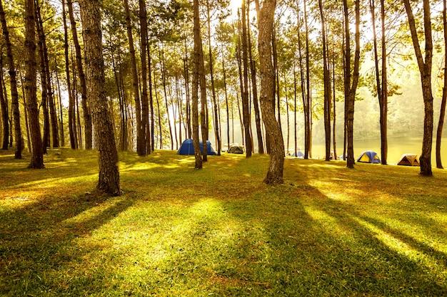 Warmer morgen sonnenlicht durch den baumstamm in einem kiefernwaldwinter, bild in der orange-blauen tönung