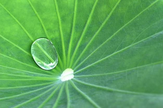 Wasser auf lotosblatt