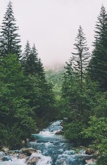 Wasser bäume