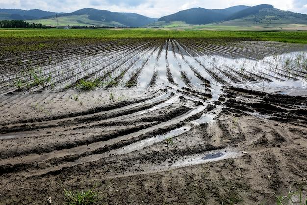 Wasser mitten in überschwemmten landwirtschaftlichen kulturen