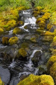 Wasser zwischen felsen und moos. sibirien, krasnojarsk gebiet.