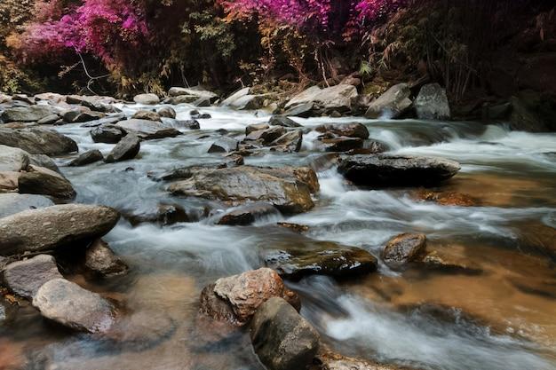 Wasserfälle in der wildnis