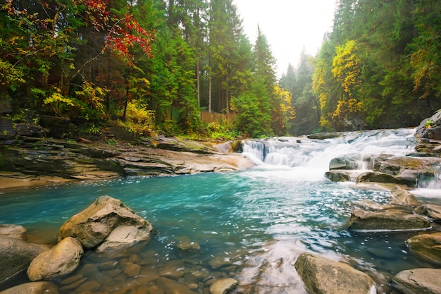 Wasserfall am gebirgsfluss im wald