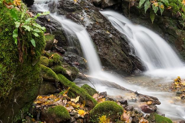 Wasserfall am gebirgsfluss und orangenblätter auf felsen