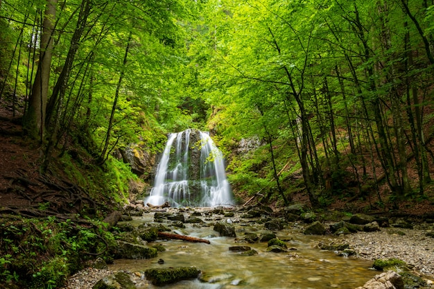 Wasserfall forest nature