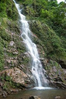Wasserfall im wald umgeben von grünen bäumen