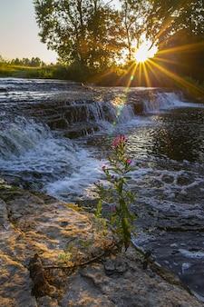 Wasserfall im wald während des sonnenuntergangs