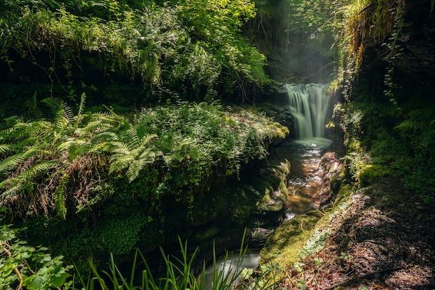 Wasserfall in einem waldgebiet mit viel vegetation