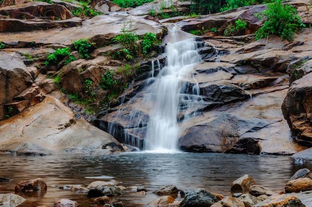 Wasserfall in wald mit grüner baumnatur