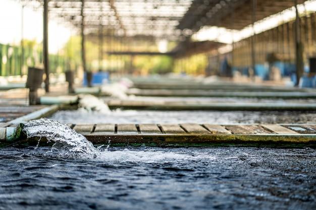 Wasserfluss-behandlungssystem aus dem wasserpumpenrohr. bewegung des wassers, das aus dem rohr der koi-teich-karpfenfischfarm für sauerstoff sprudelt. wasser wurde durch rohr-pvc abgeleitet. industrielle abwasserbehandlung.