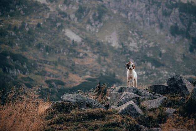 Wasserhund auf einigen felsen