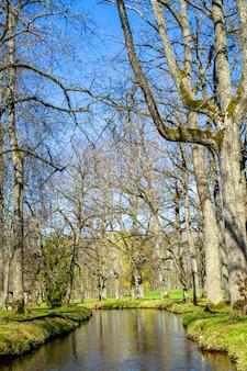Wasserkanal im park in ropazi. bäume ohne blätter am ufer. vorfrühlingsnatur in lettland.