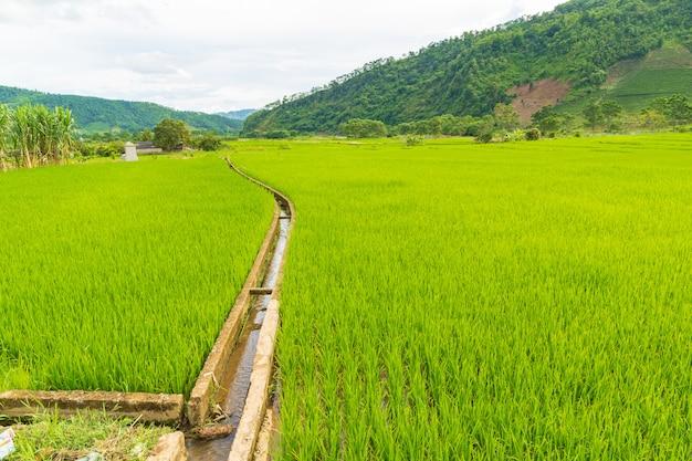 Wasserleitung oder landwirtschaftliche wasserleitung auf reisfeld und berg in sapa vietnam