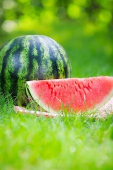 Wassermelone im freien im sommerpark