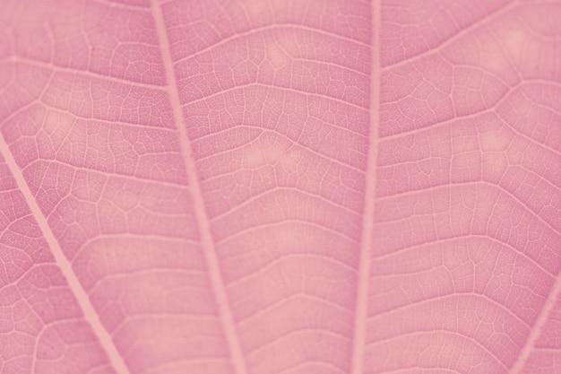 Wassermelonenrosa blattmuster strukturierter hintergrund