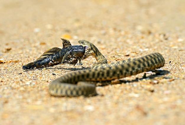 Wasserschlange im natürlichen lebensraum
