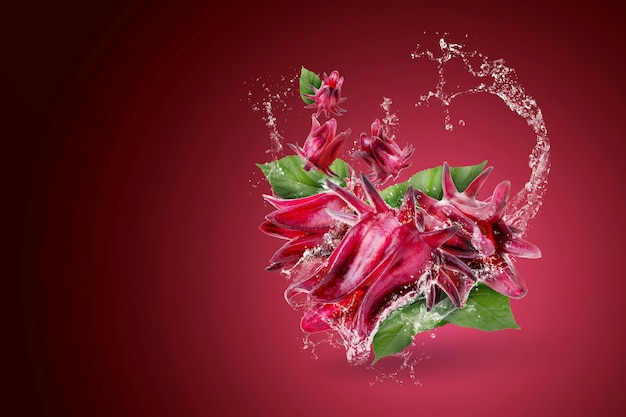 Wasserspritzen auf der roten blume roselle hibiscus sabdariffa auf rotem hintergrund