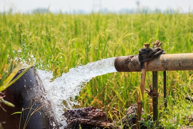 Wasserstrom von der großen pumpenröhre auf dem reisgebiet in mittel von thailand, fokus auf rohr