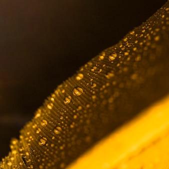 Wassertröpfchen auf der goldenen unscharfen feder gegen schwarzen hintergrund