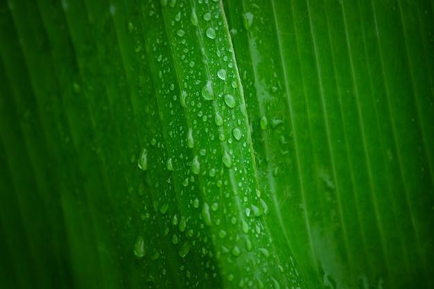 Wassertröpfchen auf einem bananenblatt mit selektivem fokus